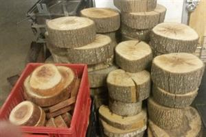 Wooden Tree Round Slices - various sizes and thicknesses
